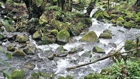 Flowing mountain stream stock video footage