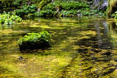 Flowing mountain stream with transparent water Royalty Free Stock Image