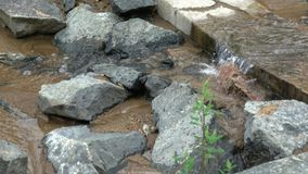 Flowing mountain stream with transparent water and stones on bottom stock video