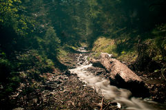 Flowing in nature Stock Photography