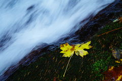 Flowing out of the green Stock Photography