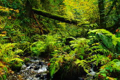 Flowing out of the green Royalty Free Stock Photography