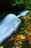 Flowing out of the green Stock Images