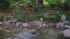 Flowing pure water in nature. Flowing pure water in tranquil nature background stock video