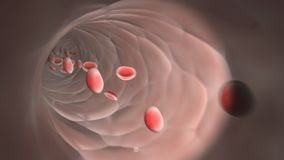 Flowing red blood cells in a vein Royalty Free Stock Photography