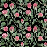 Watercolor pattern of roses and stems with leaves on a black background. Flowing ribbon and a wreath of roses and decorative leaves stock photo