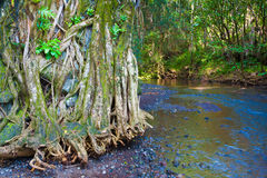 Flowing river Stock Images