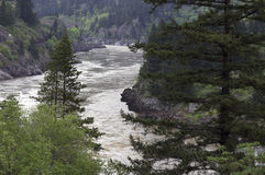 Flowing river canyon. A flowing river in canyon in British Columbia, Canada with evergreen trees royalty free stock photography