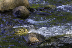 Flowing river. Closeup of flowing river over rocks Stock Image