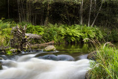 Flowing river in Estonian forest. Mystical Estonian nature with river Royalty Free Stock Photo