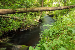 Flowing river in the forest Stock Images