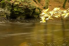 Flowing river through forest Royalty Free Stock Photo
