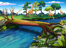 A flowing river at the forest stock illustration