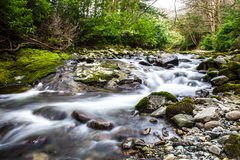 Flowing river in forest. With motion blur effect stock photography