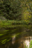 Flowing river in forest. Mystical Estonian nature with river Royalty Free Stock Images