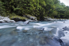 Flowing river and forest,Fiordland, New Zealand Royalty Free Stock Photography