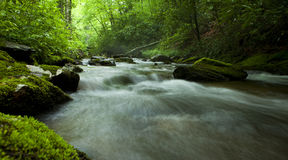 Flowing river in forest Stock Image