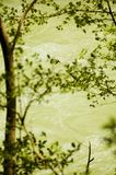 Flowing river framed by tree branches Stock Images
