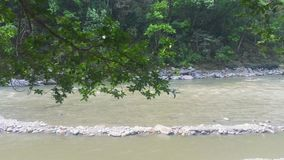 Flowing river with leaves in foreground stock footage