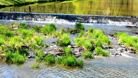 Flowing river in nature stock video