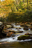 Flowing River in Smoky Mountains National Park Vertical Stock Photos