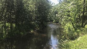 Flowing river in the woods on summertime, beautiful sight. Beautiful view of flowing wild river in the green woods on summertime, refreshing water, goal for stock video footage