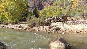 Flowing River at Zion National Park Utah Panning Shot stock video