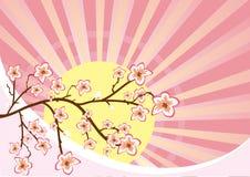 Flowing Sakura tree Royalty Free Stock Photography