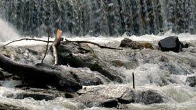 Flowing Small Waterfall Water Foamy Splash Flowing