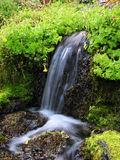 Flowing spring Stock Image
