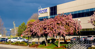 Flowing spring trees at Micron Technology Royalty Free Stock Photo