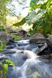 Flowing stream. A flowing stream with lots of foliage behind it Stock Photo