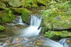 Flowing stream in the autumn forest Stock Image
