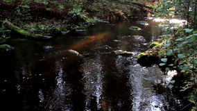Flowing stream and a bit of sunlight stock video footage