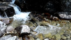 Flowing stream stock video footage