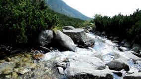 Flowing stream stock video