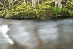 Flowing stream in the forest Royalty Free Stock Images