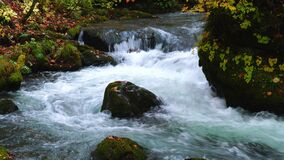 Flowing stream in the forest at Oirase Gorge.