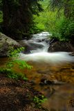 Flowing Stream in the Forest Royalty Free Stock Photography