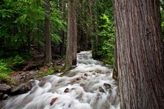 Flowing Stream. In Glacier National Park, Montana Stock Photos