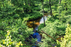 Flowing stream Royalty Free Stock Photos