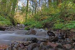 Flowing Stream Near Mt. Hood Royalty Free Stock Images
