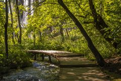 Flowing stream scenery in Plitvice lakes park with boardwalk in front of a waterfall, Croatia. Beautiful Relaxing scenery in the early morning on a sunny day Stock Image