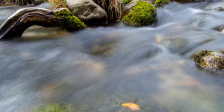 Flowing Stream royalty free stock image