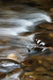 Flowing water. Water flowing over rocks in Great Smoky Mountains National Park Stock Image