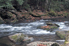 Flowing water. Mountain creek during fall Royalty Free Stock Images
