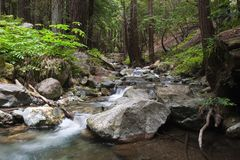 Flowing water. Through the forest, Limekiln State Park California Royalty Free Stock Image