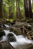 Flowing water. Through the forest, Limekiln State Park California royalty free stock photos