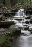 Flowing water. Through the forest, Limekiln State Park California Royalty Free Stock Photography