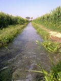 FLOWING WATER BETWEEN FARMLAND. FLOWING WATER BETWEEN OWN FARMLAND IN INDIA. AMAZINGLY MOMENT TO SEE THE FLOWING WATER royalty free stock photos